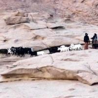 e10_bedouins