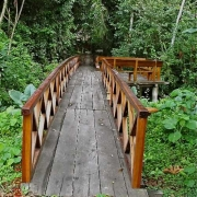 p07_jungle-path