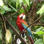 p07_macaw