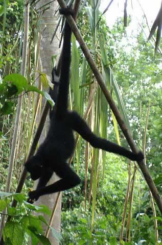 p07_monkey-island