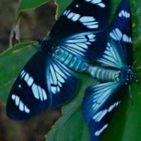 p09_butterflylove