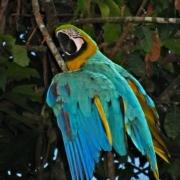 p09_macaw