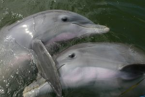 dolphins hugging